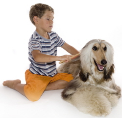 Boy brushing dog